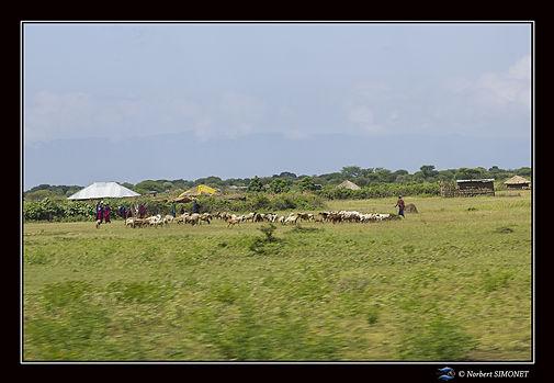 Village_masaïs_-_Cadre_Paysage_-_Zone_d