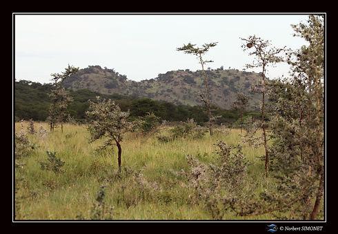 Paysage arrière plan rocheux- Cadre Pays