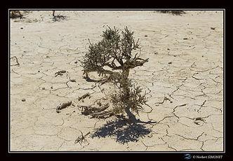 plante_désert_-_Paysage_-_Canon_EOS7DMII