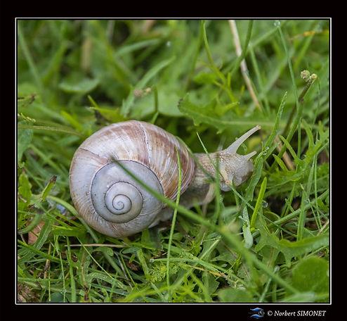 Escargot bis - Cadre Carré - Les Butineuses 28072021.jpg