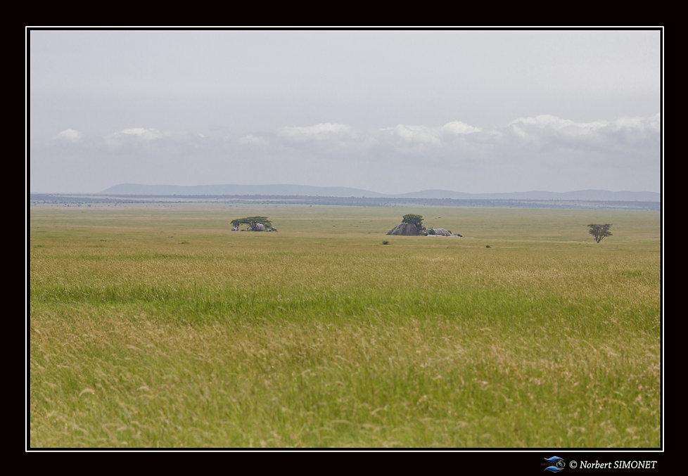 Kopjes dans le paysage 10 - Cadre Paysag