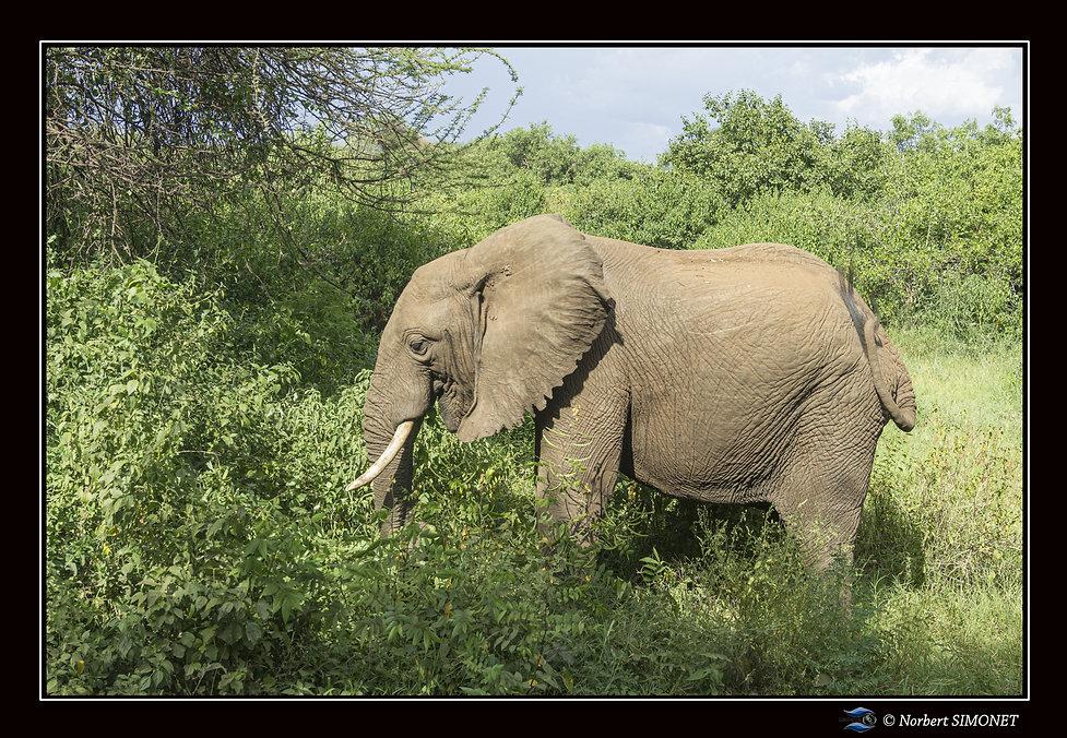 Elephants profil entier - Cadre Paysage