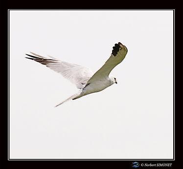 Oiseau en vol - Cadre Carré - Plaines de