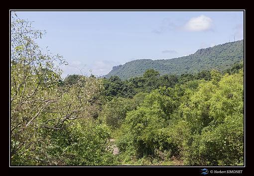 Végétation_bis_-_Cadre_Paysage_-_Parc_