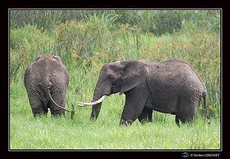 Eléphants_dans_les_marais_-_Cadre_Paysa