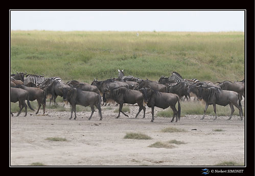 Gande migration 18 - Cadre Paysage - Pla