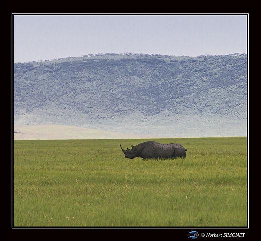 Rhinocéros_dans_le_paysage_-_Cadre_Carr