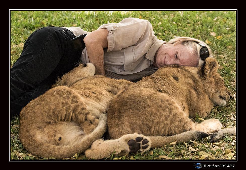 Lionceaux câlin contre Plume GP - Cadre