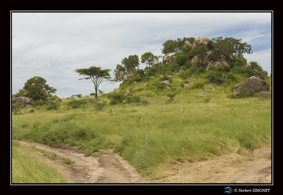 Kopje 1 Cadre paysage - Serengeti 230220