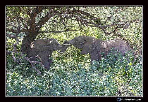 Elephants jouent - Cadre Paysage - Parc