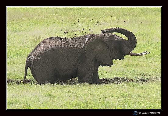 Elephant_s'asperge_de_boue_-_Cadre_Paysa