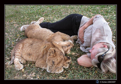 Lionceaux contre Plume Signé - Bandia -