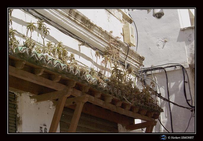 Toit et plantes Casbah.jpg