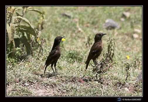 Oiseaux_marrons_-_Cadre_Paysage_-_Cratè