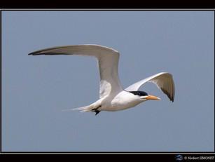 Oiseaux en vol et photo du mois...