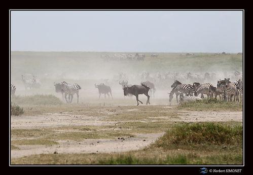 Gande migration 12 - Cadre Paysage - Pla