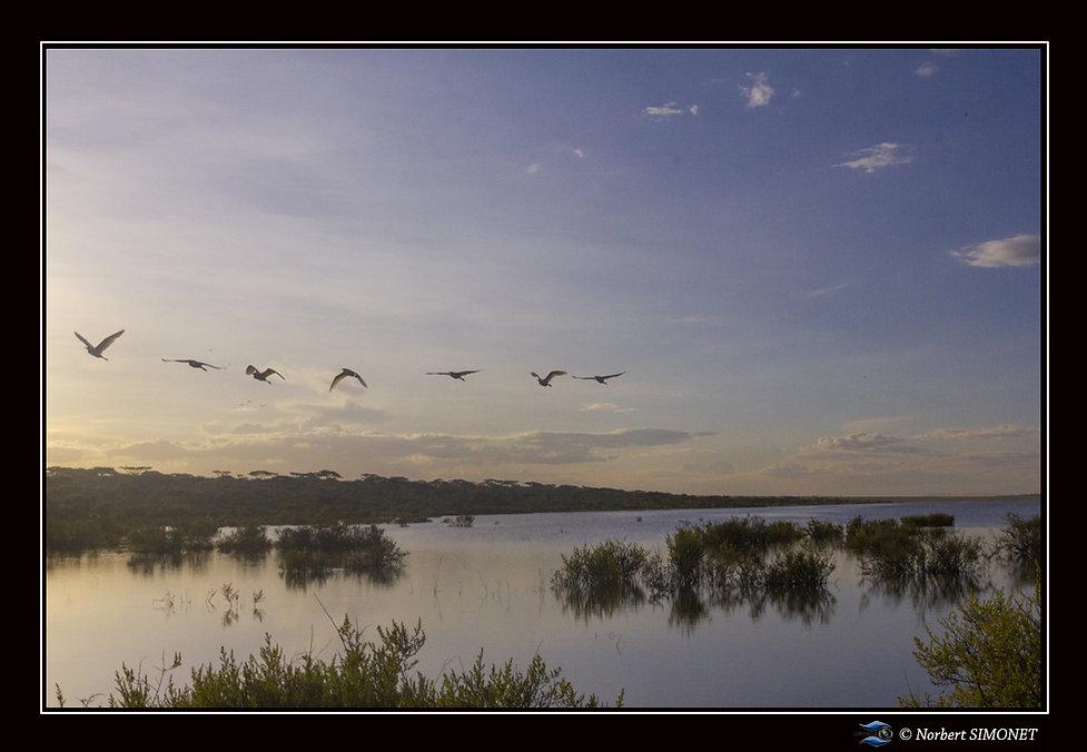 Levé_de_soleil_et_vol_d'oiseaux_dans_le