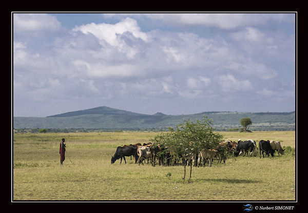 Massaï_et_troupeau_-_Cadre_Paysage_-_Ki