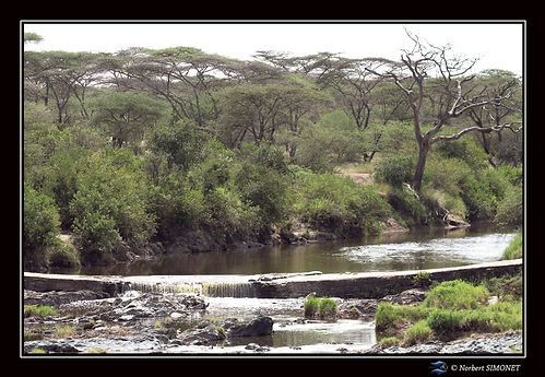 Cours d'eau - Cadre Paysage - Serengeti