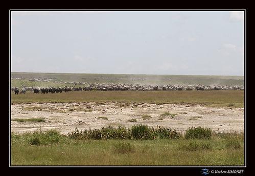 Gande migration 10 - Cadre Paysage - Pla