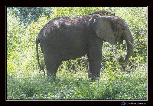 Eléphants_profil__-_Cadre_Paysage_-_Par