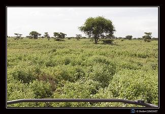 4x4 dans la plaine ter - Cadre Paysage -