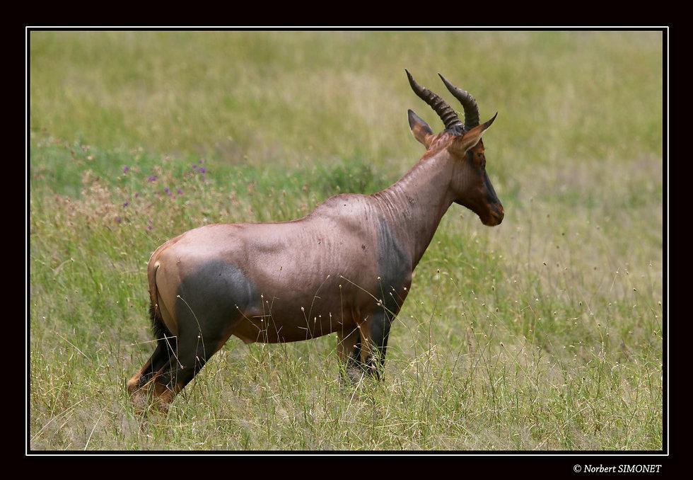 Topi profil GP - Cadre Paysage - Serenge