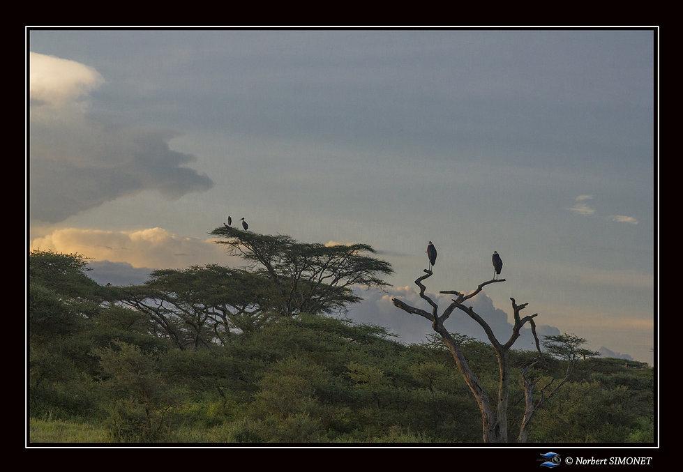 Marabouts soleil couchant - Cadre Paysag