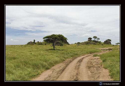 Kopjes  Piste - Cadre Paysage - Serenget