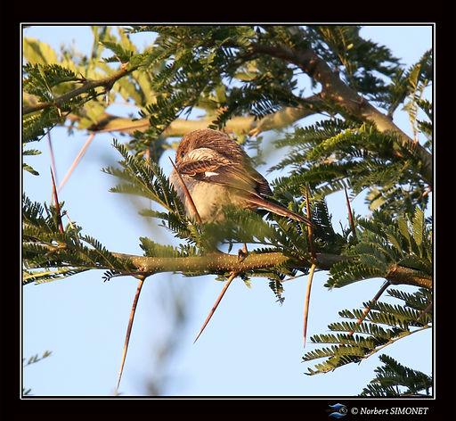 oiseau_blotti_-_Cadre_Carré_-_Cratère_