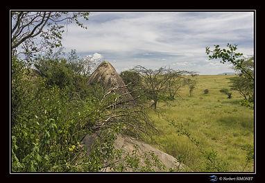 Kopje proche - Cadre Paysage - Serengeti