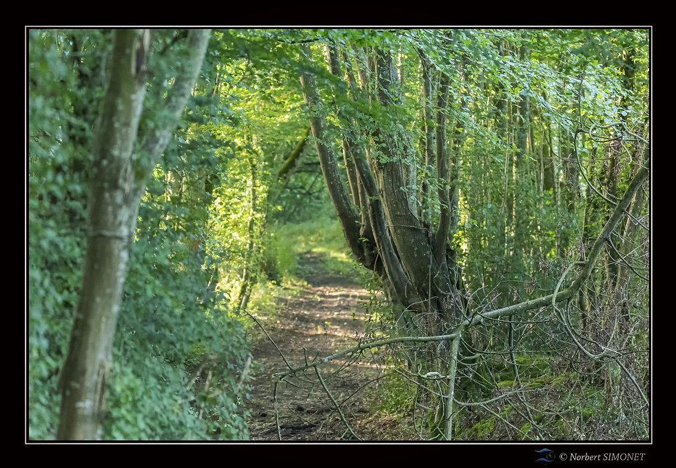 Allée forestière - Cadre Paysage - Les Butineuses 28072021.jpg
