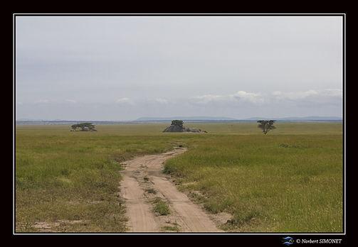 Kopjes et piste dans le paysage 10 - Cad