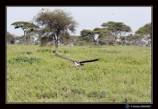 Marabout plane - Cadre Paysage - Serenge