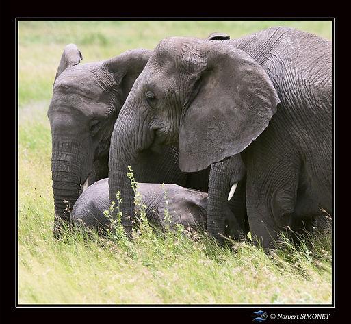 Eléphant et éléphanteau - Cadre Carré -