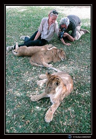 Lionceaux Plume et photographe - Cadre P