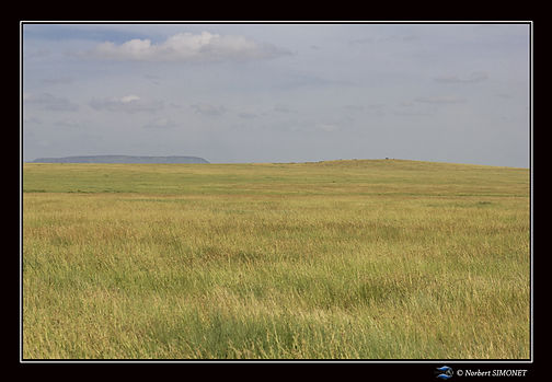 Plaine - Cadre Paysage - Serengeti 23022