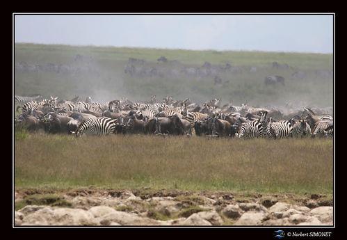 Grande migration 11 - Cadre Paysage - Pl