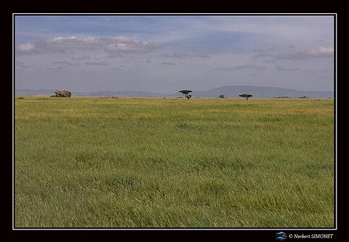 Paysage Serengeti bis - Cadre Paysage -