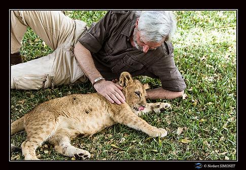 Lionceau caressé par Norbert - Cadre Pay