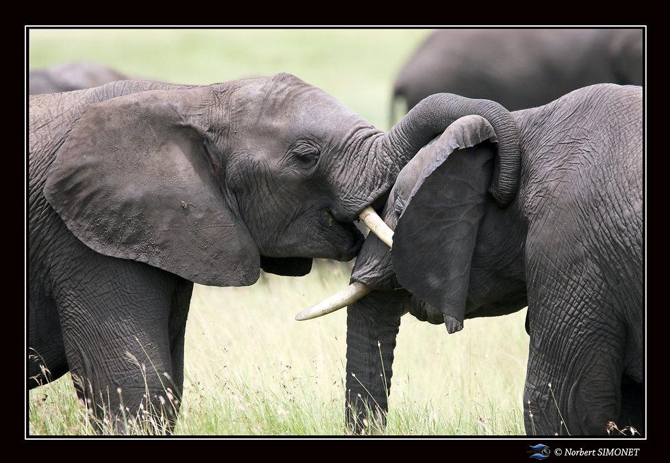 Eléphants_jouent_bis_-_Cadre_Paysage_-_