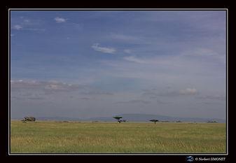 Plaine du Serengeti et kopjes - Cadre Pa