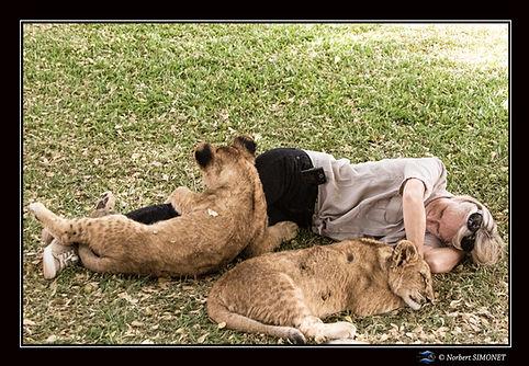 Lionceaux câlin sur Plume GP - Cadre Pay