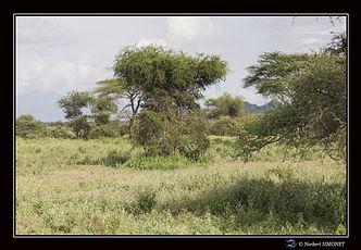 Paysages arbres ter - Cadre Paysage - Pl