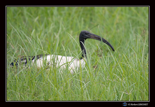 Ibis_-_Cadre_Paysage_-_Cratère_du_Ngoro
