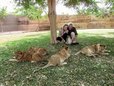 Lionceaux rencontre 2 - Ranch de  Bandia