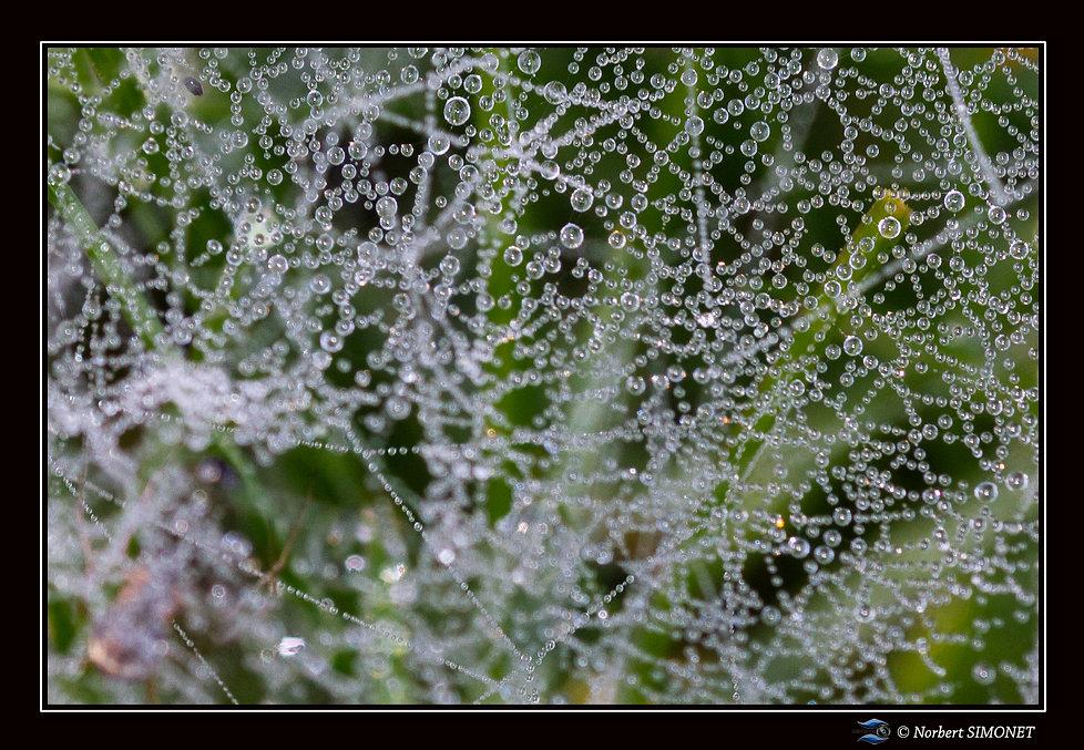 Toile_d'araignée_macro_1_Paysage_-_21022