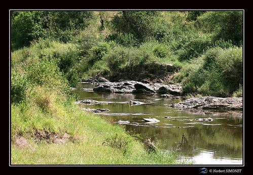 Point d'eau - Cadre Paysage - Serengeti