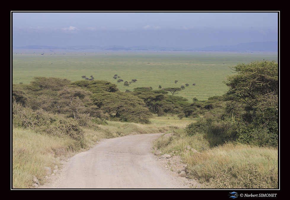 Piste_entrée_Serengeti_-_Cadre_Paysage_