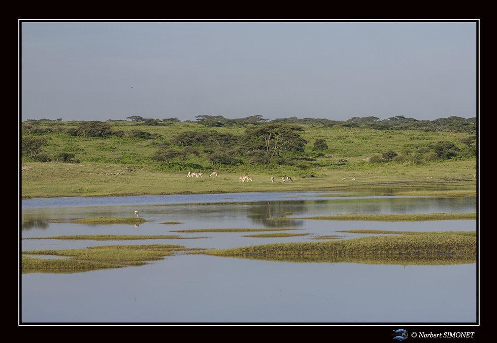 Point d'eau et animaux - Cadre Paysage -